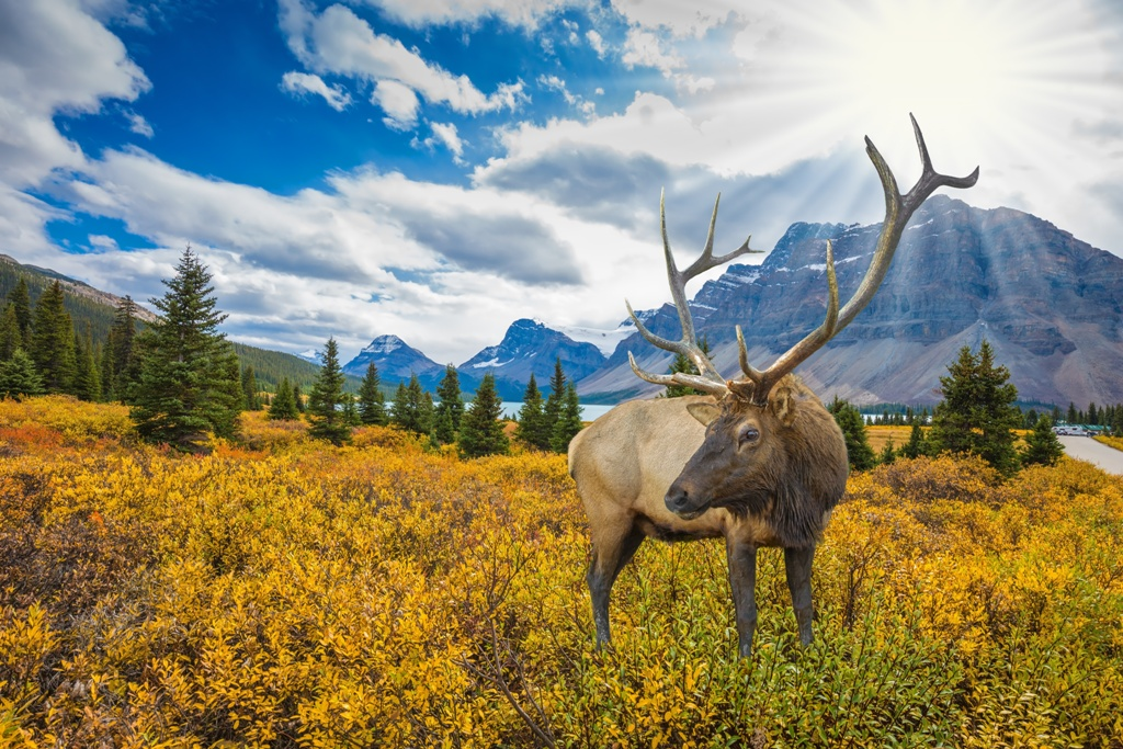 Voyage Canada Sejour Canada Vacances Canada Avec Voyages