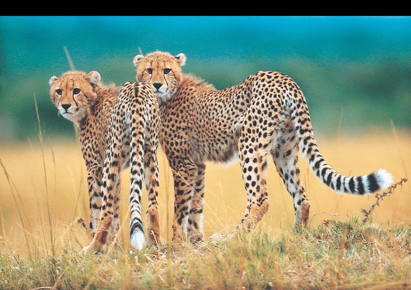 V EXPERIENCE AFRICAINE - 26J/23N - limité à 12 pers. Capetown à Victoria Falls - voyage  - sejour