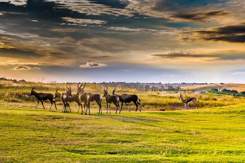 Circuit Safari Dream, Chutes Victoria & Parc Chobe - 1